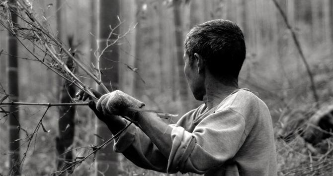 Parquet Bois Dur Ecologique : Parquets ecoligne bambou toutes l actualit� des produits
